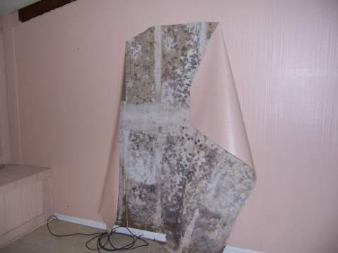 Wallpaper mold 2